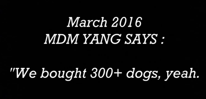 300 dogs saved from Yulin 2015